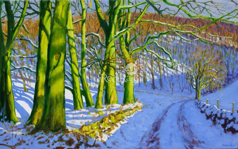 Andrew MACARA  - Green Trees, Winter, Dam Lane, Derbyshire