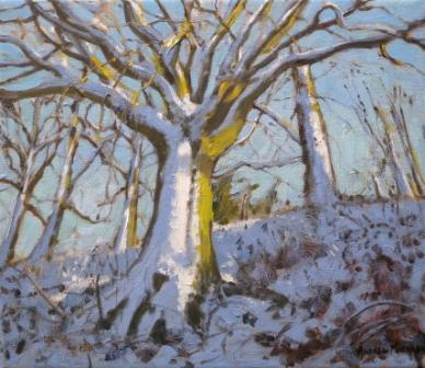 Andrew MACARA  - Snowcovered Tree