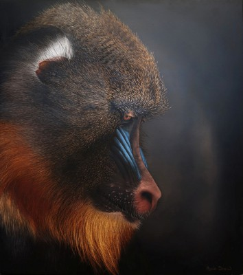 Mandrill painting by artist Annie DREW