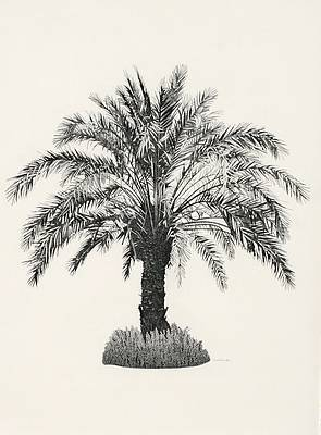 Annie OVENDEN - Palm Tree in Paphos