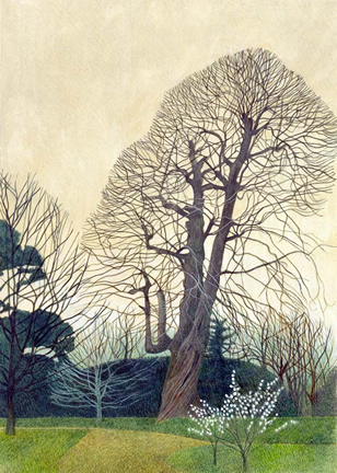 Limited Edition Prints Artist Annie Ovenden - Sweet Chestnut In Saltran