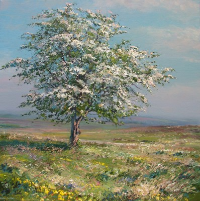 Mark PRESTON - Hawthorn Blossom, White Edge Moor