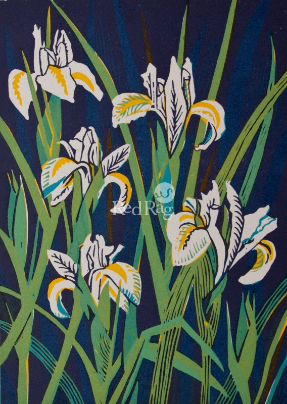 Linda Richardson - Dutch Irises