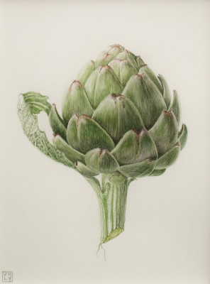Louise YOUNG - Little Artichoke