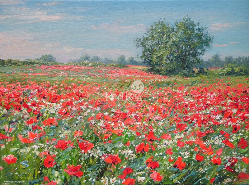 Mark PRESTON - Poppies and Blue Sky, Ednaston