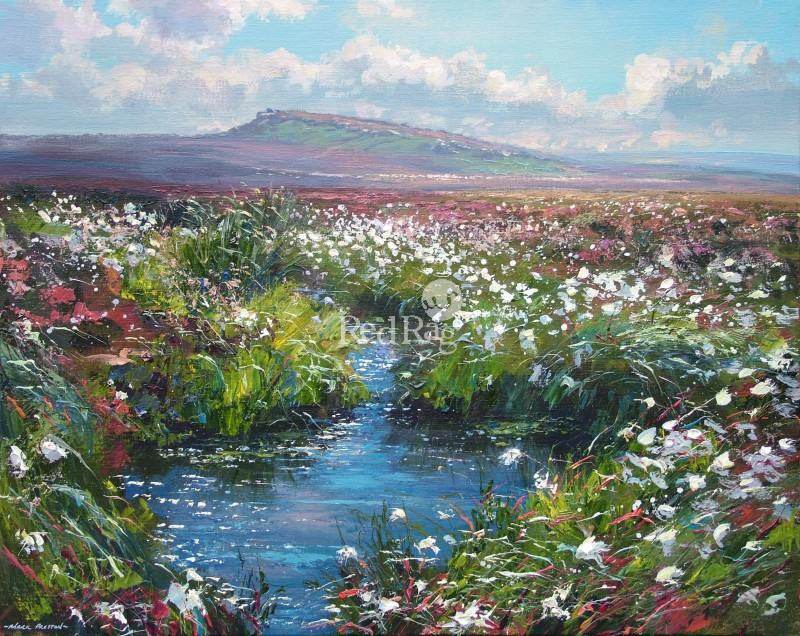 Mark PRESTON - Cotton Grass, Hallam Moors