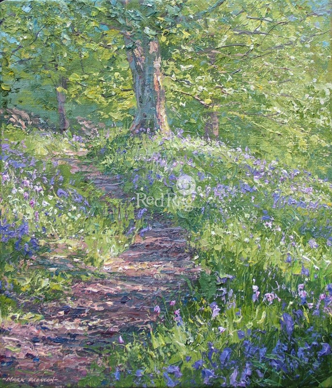 Mark PRESTON - Bluebells, Bramley Wood