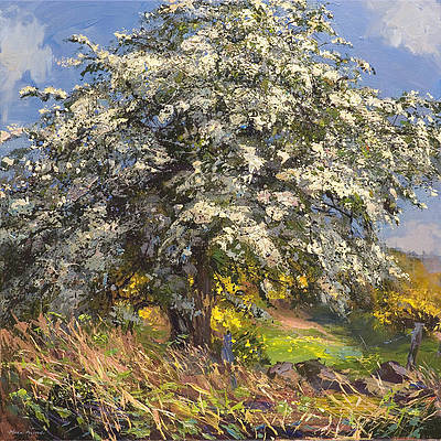 British Artist Mark Preston - Mayblossom
