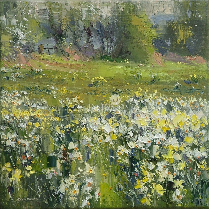 Rex PRESTON - Narcissi at the Old Nurseries