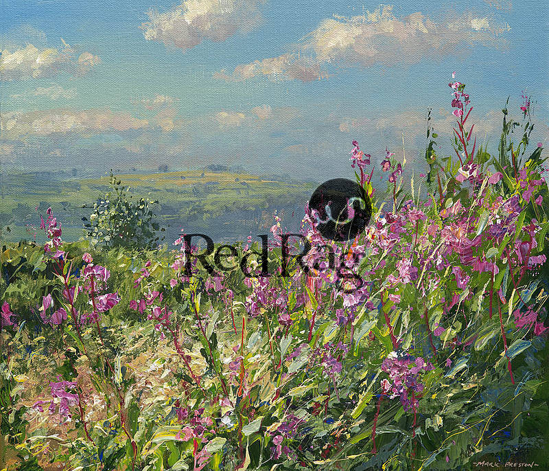Mark Preston - September Willowherb
