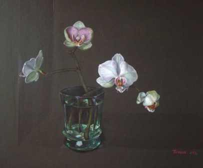 Tobias HARRISON - Orchid Phalaenopsis in a Glass
