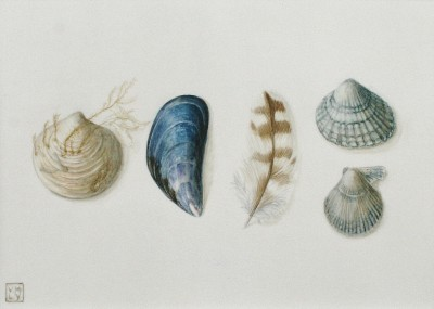 British Artist Louise YOUNG - Sea Quintet